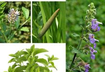 Herbs that Instantly Kill Your Nicotine Craving